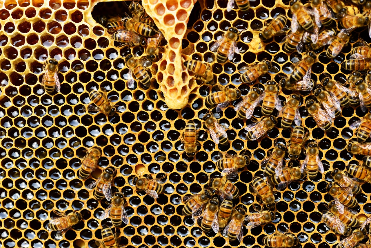close up photo of a bee hive