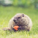 Essential Pointers for Keeping Wildlife Out of Your Yard