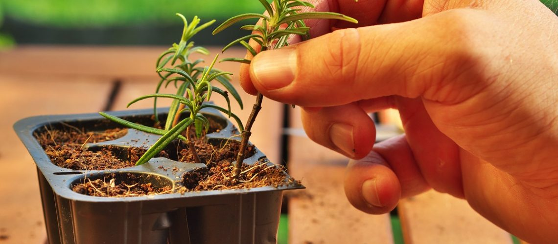 person placing a plant into a recycled material